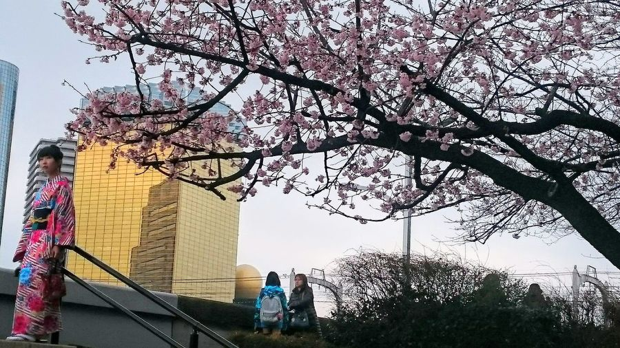 Ultimate Japan Ultimate Tokyo Tokyo Kimono Kimono Girl Asahi Building Cherry Blossoms Japanese Trademarks Typical Japan Pink Kimono Golden Building Blossoming  Spring In Tokyo Showcase July People And Places TakeoverContrast