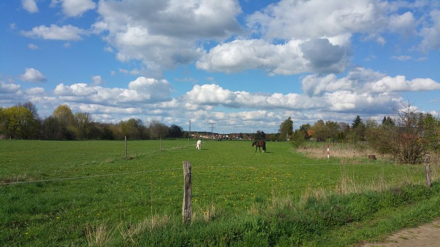 Picture Of Today Falkenberg Berlin Sky Sky_collection Cloud Clouds And Sky Meadow Field Animal Horse Nature Nature Photography Nature_collection Landscape Landscape_Collection ohne Filter 2016