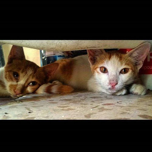 😽😼 Kitty Streetcat Instacats Love Cute Kitten Streetlife Stray Baby Meow Abudhabi UAE Albateen Cat Feline Instacats Kittendaily Streetlifestyle Syblings Family Wild Free Savethekitty Catshooter