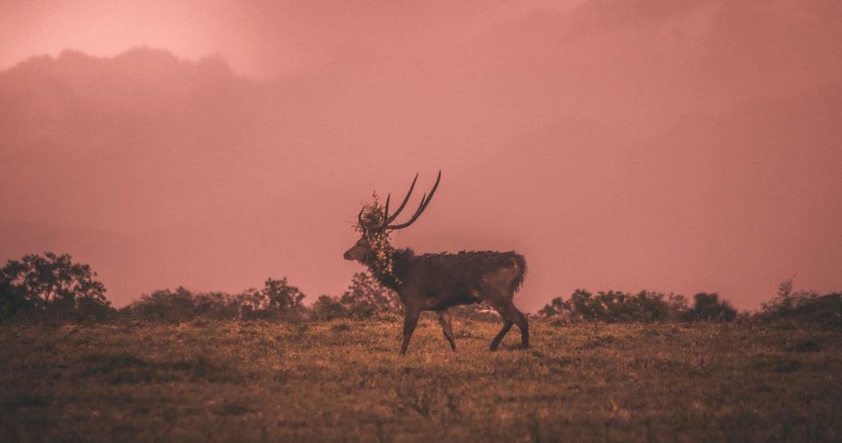 Side view of deer on field during sunset