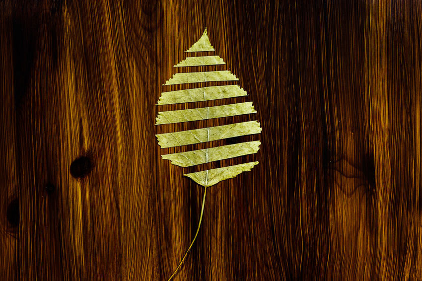 Autumn colors Autumn Leaves Backgrounds Brown Christmas Close-up Day Decoration Design Directly Above Full Frame Green Color Illuminated Indoors  No People Pattern Shape Still Life Table Wall - Building Feature Wood Wood - Material Wood Grain