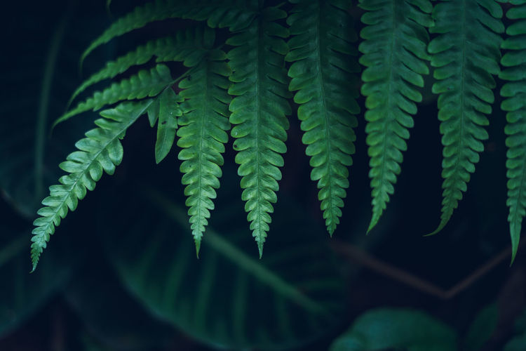 Green Color Growth Close-up Plant Leaf Plant Part Fern Selective Focus No People Beauty In Nature Nature Day Freshness Vulnerability  Fragility Focus On Foreground Outdoors Natural Pattern Tranquility Pattern