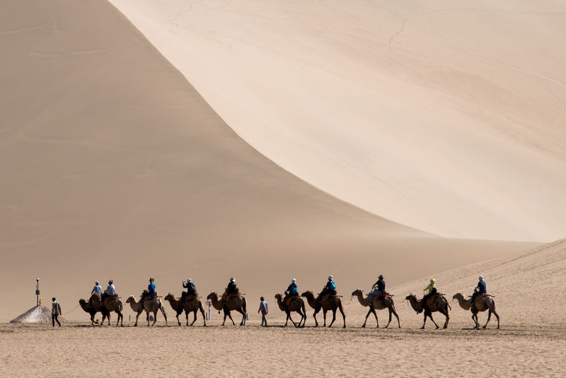 Singing Sand Dunes in Dunhuang, Gansu Province, China ASIA DunHuang Silk Road Traveling Arid Climate Camel Camels China Day Desert Domestic Animals Landscape Large Group Of Animals Livestock Mammal Men Nature One Person Outdoors People Sand Sand Dune Silhouette Sky