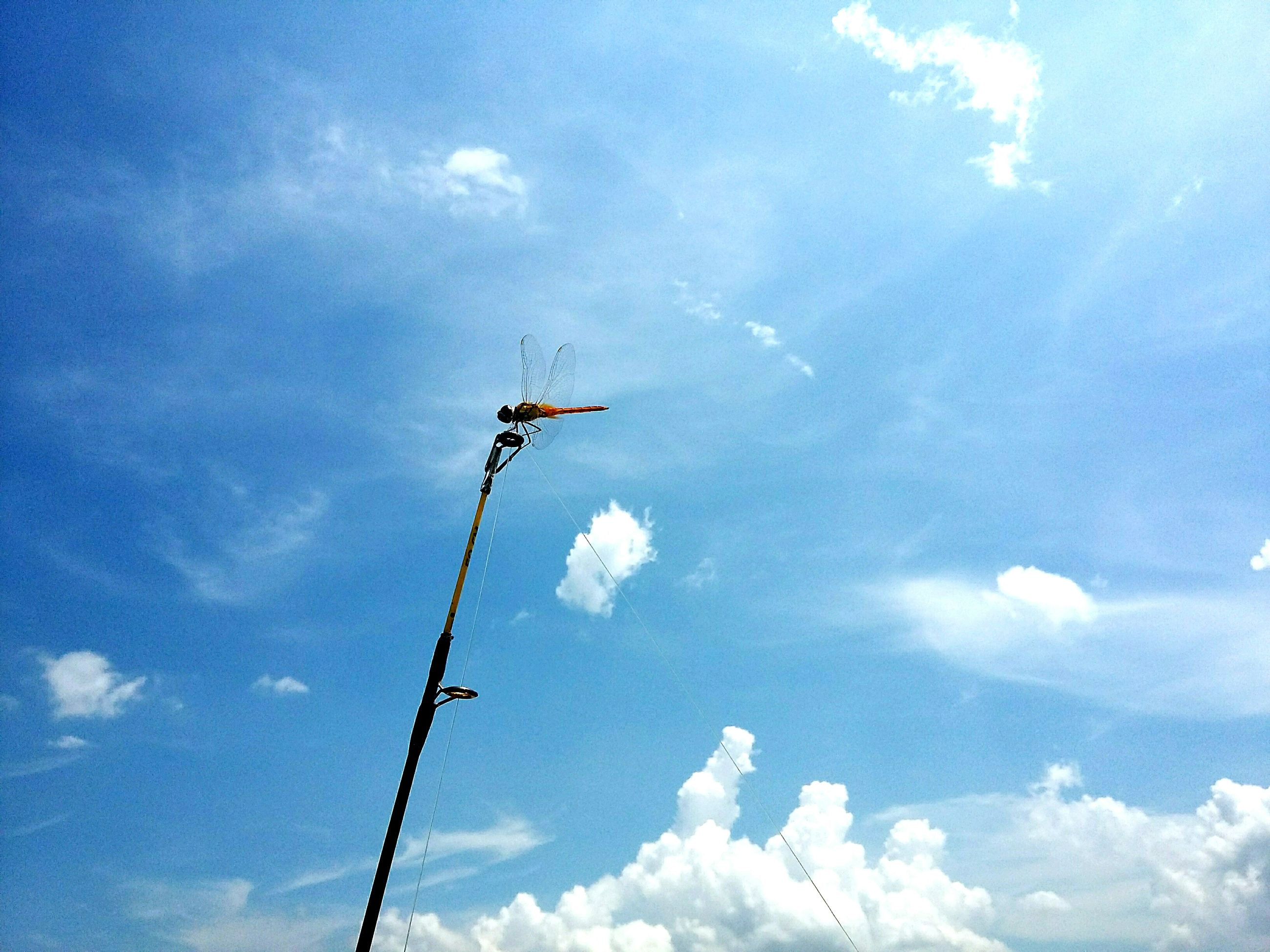 low angle view, sky, cloud - sky, blue, cloudy, cloud, transportation, cable, mode of transport, power line, day, flying, outdoors, no people, technology, electricity, nature, mid-air, air vehicle, on the move