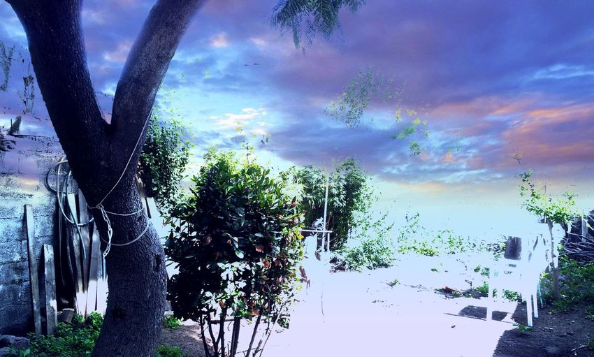 Technicolour Dreamworld Blurry My Magical Universe Trees And Sky Trees On My Mind' Faraway Fantasy Dreaming Oniric Dreamworld Multi Colored Sky Cloud - Sky Scenics Rainbow Idyllic Spectrum Refraction Tranquility