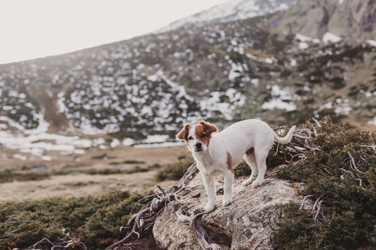 Dog standing on rock