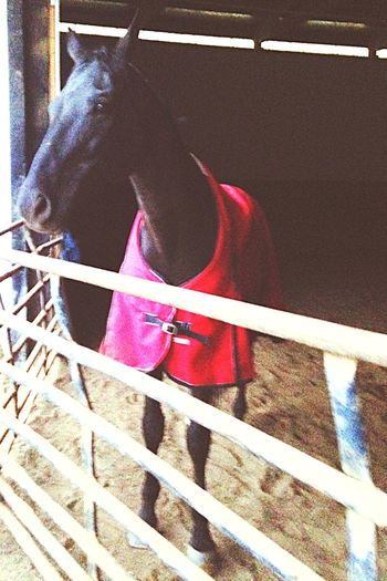 Heza Silver Cloud Oh Hi There  UCET Equestrian Life Grumpy Old Man Kind Eyes