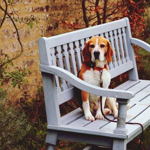 Portrait of dog sitting on seat in yard