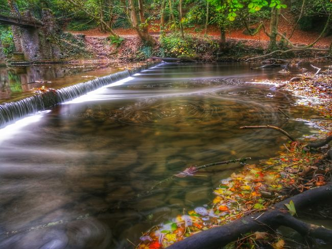 Water Nature Autumn Stream - Flowing Water Tree No People Outdoors Beauty In Nature Huawei Photography EyeEm Best Shots EyeEm Selects Silky Water Beauty In Nature River Motion Scenics Long Exposure Snapseed WoodLand P10 Plus Photography Long Exposure Shot Forest