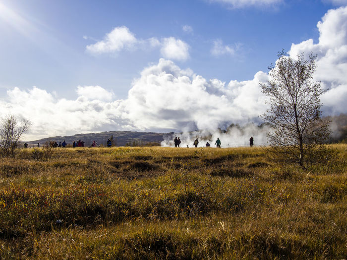 Grass Environment Sky Landscape Plant Cloud - Sky Land Nature Day Mammal Animal Field No People Livestock Tranquil Scene Beauty In Nature Domestic Tranquility Outdoors Herd Geyser Iceland Geothermal