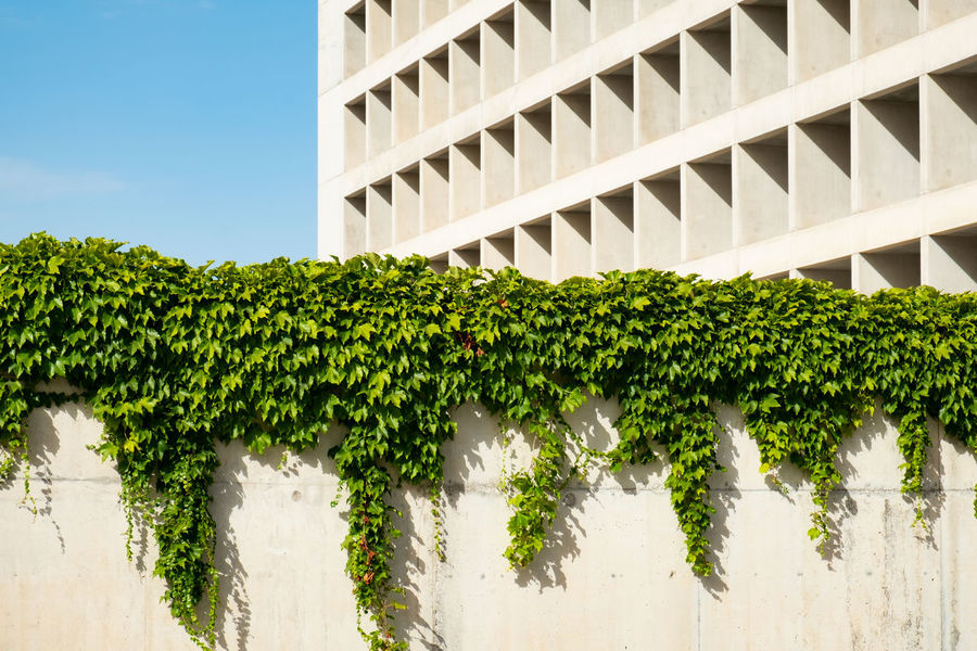 Granada Bankia Granada, Spain Minimal Minimalist Architecture Minimalist Plant Growth Architecture Built Structure Green Color Building Exterior Nature Day No People Tree Low Angle View Outdoors Building Sky Sunlight Wall - Building Feature In A Row White Color Ivy Leaf Hedge