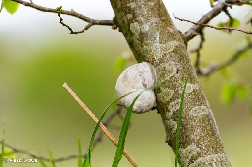 Focus On Foreground Nature Close-up No People Animal Themes Growth Day Tree One Animal Plant Animals In The Wild Animal Wildlife Fragility Outdoors Beauty In Nature