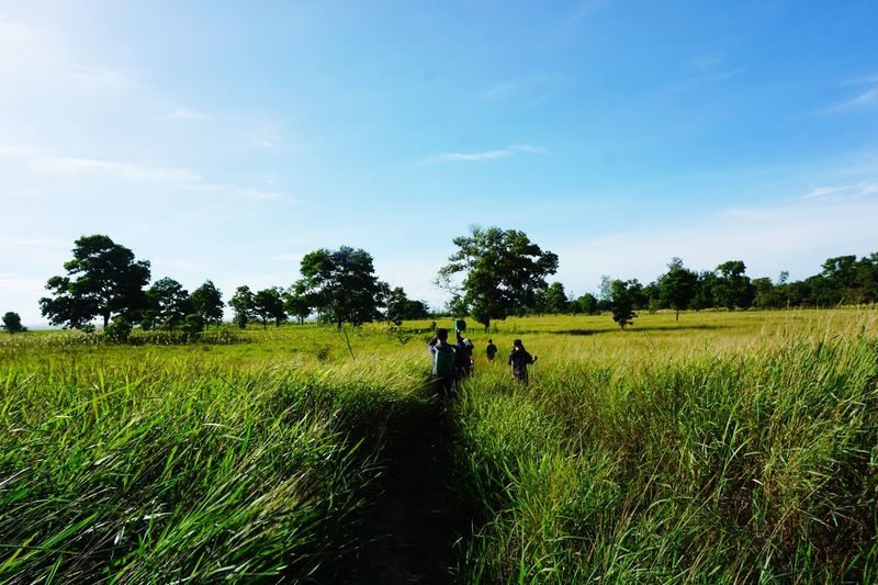 Grass field Plant Field Real People Sky Land Landscape Environment Growth Agriculture Adult Rural Scene Men Tree Nature Crop  Green Color Scenics - Nature Day Farm People