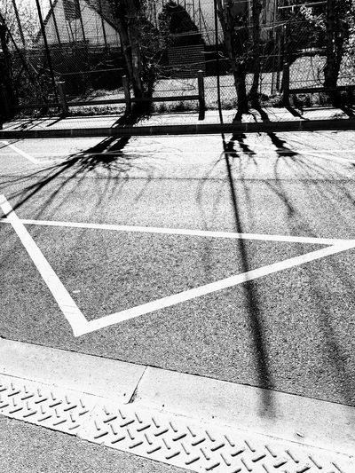 Sunlight And Shadow Sunlight, Shades And Shadows Shadows Trees Branches Sunlight Focus On Shadow Long Shadow - Shadow Pavement Paving Stone
