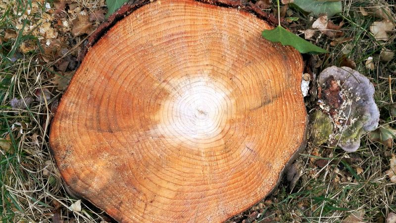 Tree Ring Tree Tree Stump Nature Wood - Material No People Log Timber Day Outdoors Tree Nature Wood Beauty In Nature