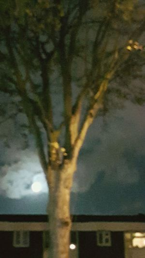 Nighttree