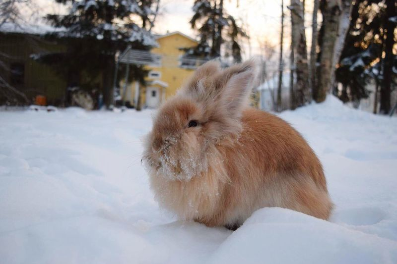 Snow Winter Cold Temperature Animal Themes Mammal Weather Domestic Animals One Animal Pets Nature No People Field Tree Outdoors Beauty In Nature Day