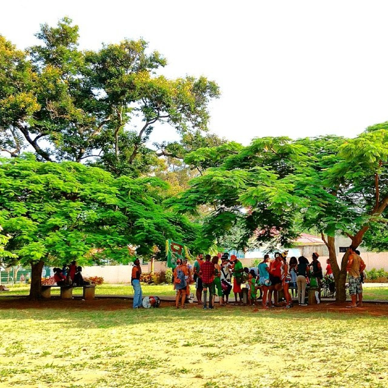 tree, large group of people, real people, men, nature, leisure activity, growth, day, women, lifestyles, competition, togetherness, outdoors, sport, horse racing, beauty in nature, competitive sport, sky, mammal, people, adult, adults only