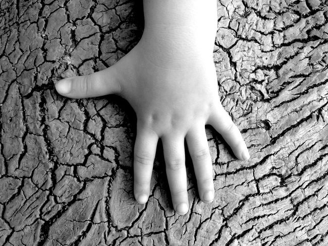 Baby Babyhands Oldtree Hello World Blackandwhite Antalya Turkey