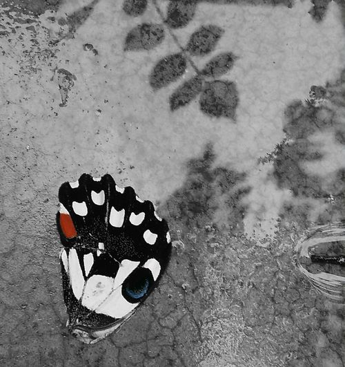 Butterfly wing 'fallen beauty' Butterfly Wings Of Dreams Beauty Nature Insects  Wet Butterfly Beauty Fine Art Photography