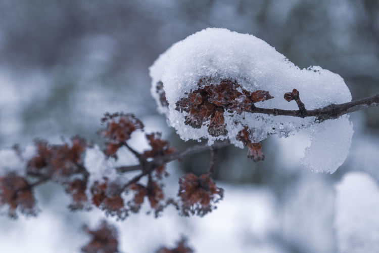 Spring snowfall in New York Beauty In Nature Blizzard Branch Close-up Cold Temperature Covering Day Extreme Weather Focus On Foreground Frost Frozen Ice Nature No People Outdoors Plant Powder Snow Snow Snowing Tranquility Tree White Color Winter EyeEmNewHere