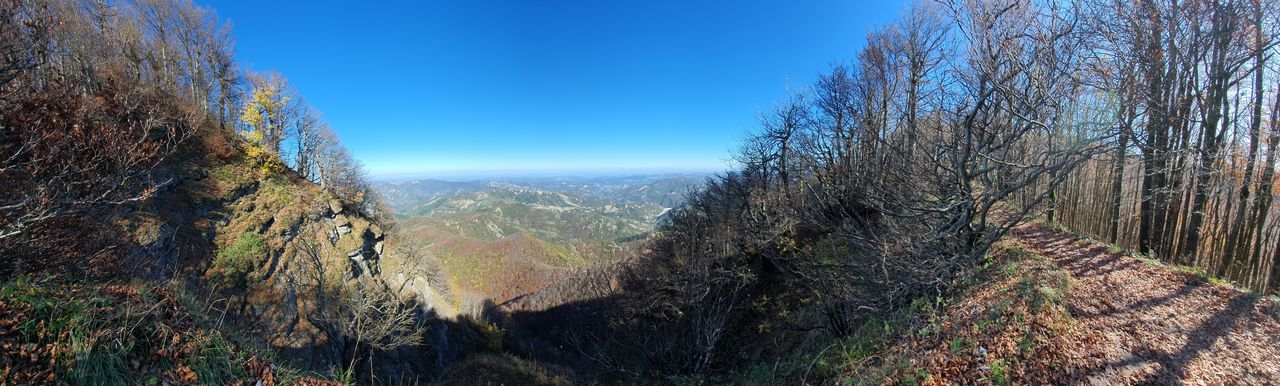 Panoramic view of forest against clear blue sky