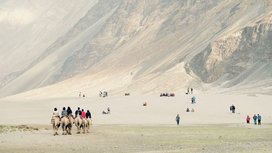 People Riding Camels At Nubra Valley