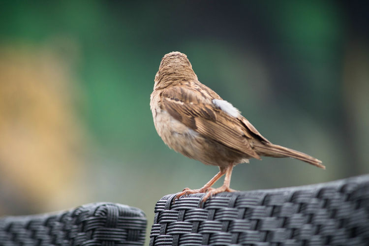 Close-up of bird perching on seat