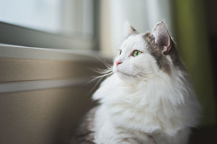 Close-up of a cat looking out of window