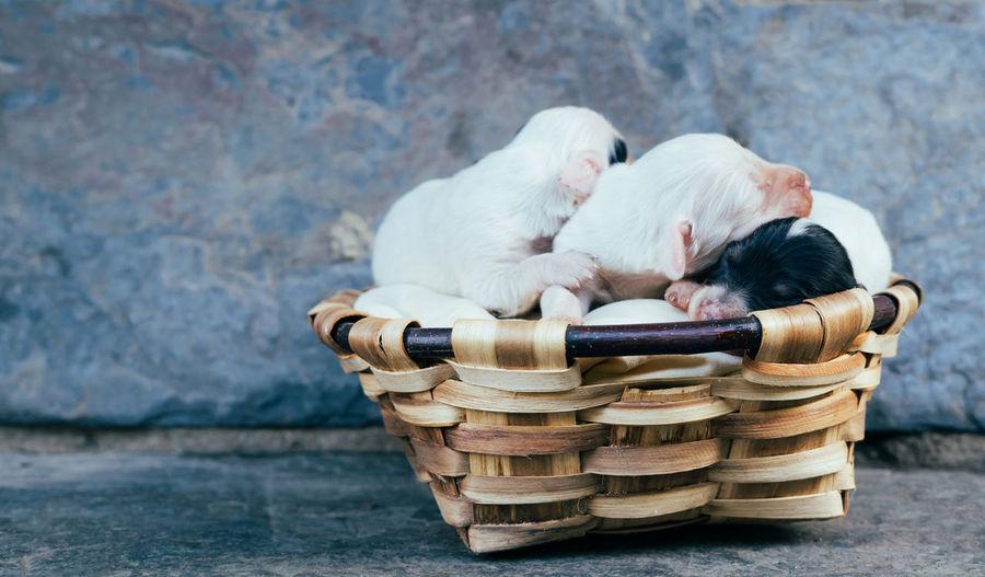 Dog sitting in basket