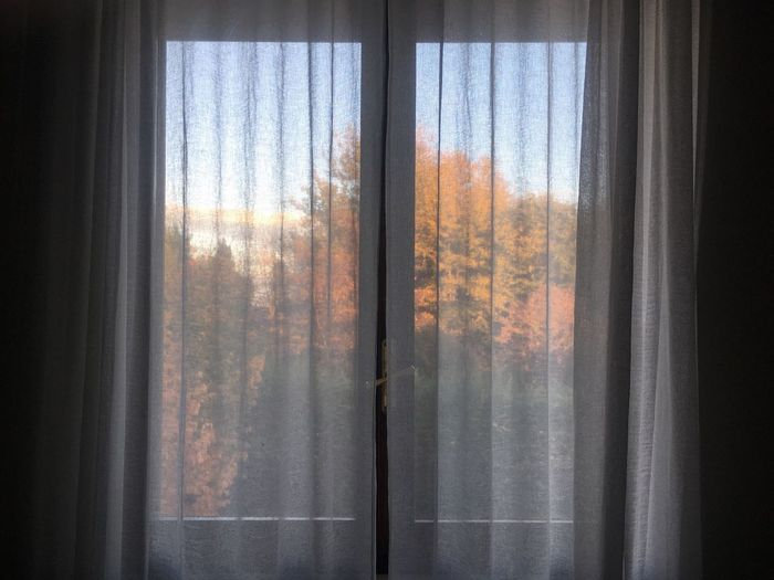 Autumn in Pianura Autumn Curtains Window Glass - Material Indoors  Transparent Curtain No People Day Home Interior Translucent Orange Color