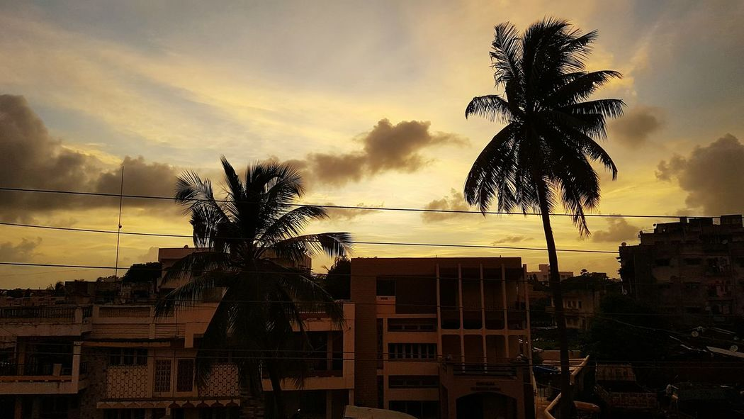Sky Silhouette Tree Cloud - Sky Cloud Sunset Palm Tree Beauty In Nature Colour Of Life Adapted To The City This is the view from my gallery and I am so adopted to this view. Live For The Story