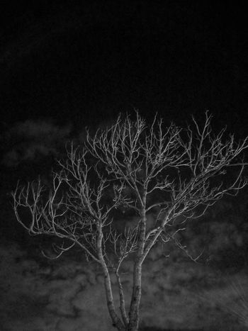 Night Time Nature Outdoors Sky Beauty In Nature Bare Tree