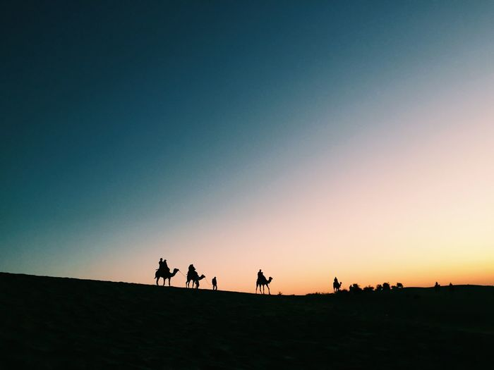 Silhouette camels on desert against clear sky during sunset