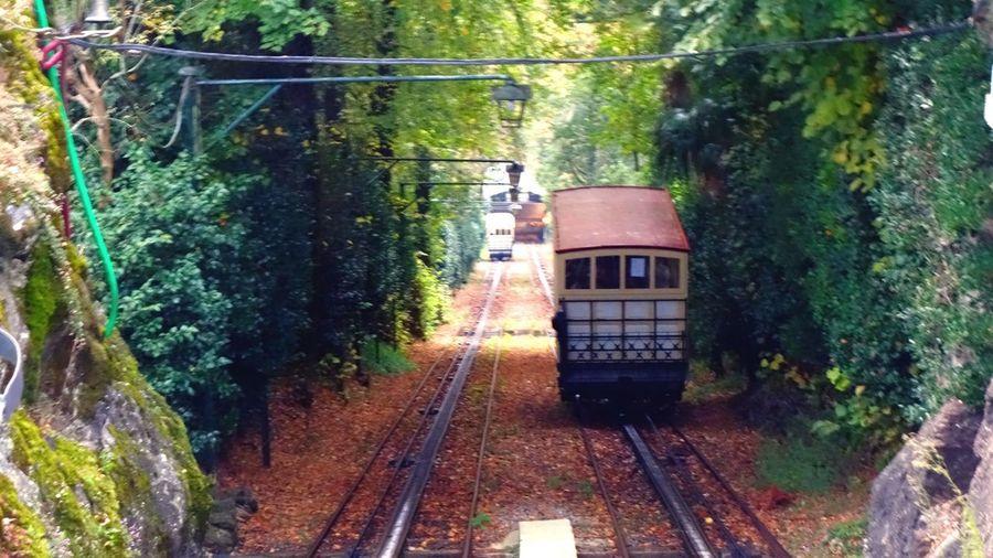 Railroad track amidst trees