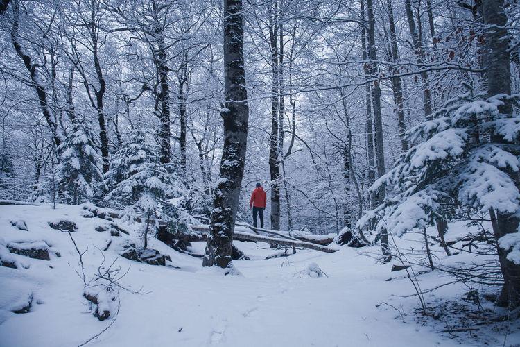 Bosque en