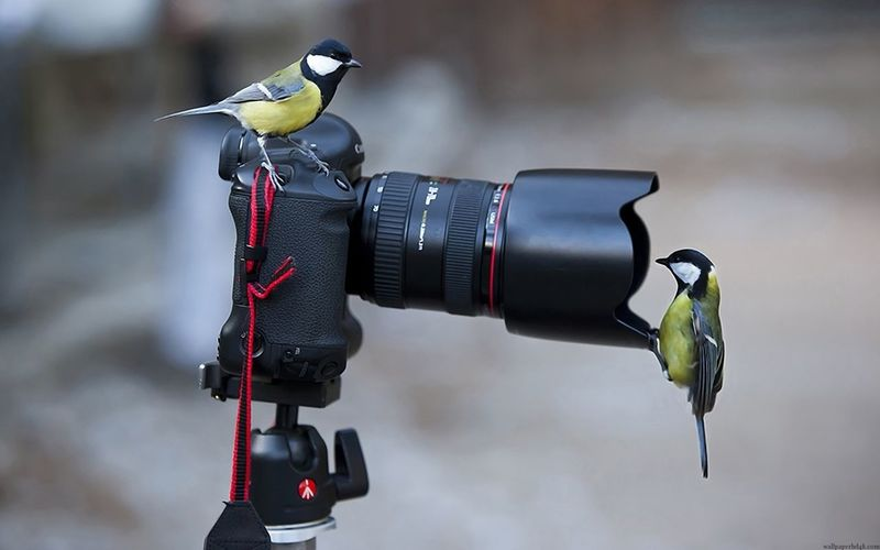 Birds perching on camera outdoors