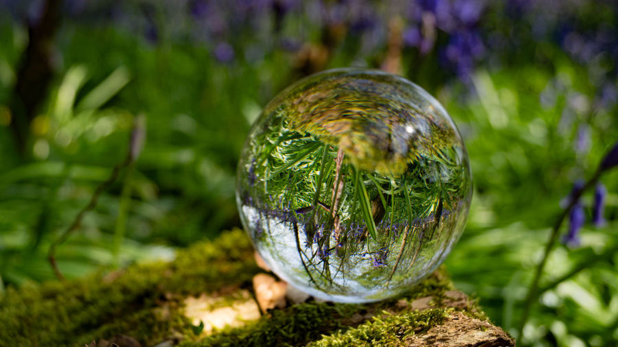 Crystal Ball Light Magnifying  Photo Sphere  Ball Bokeh Bokeh Photography Close-up Crystal Ball Day Field Focus On Foreground Glass - Material Grass Green Color Growth Land Magnify Moss Nature No People Outdoors Plant Reflection Refraction Sphere Transparent Tree