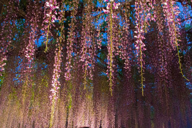 Trees in bloom at night