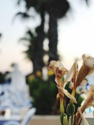 Blüme Flower