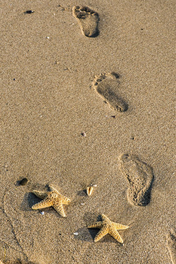 Steps Traces Traces In The Sand Star Sea Beach Seastar Sand Background Land High Angle View Nature No People Animal Animal Wildlife Animal Themes Day Animals In The Wild FootPrint Vertebrate Sunlight Outdoors Animal Track Wet Crab One Animal Starfish  Marine