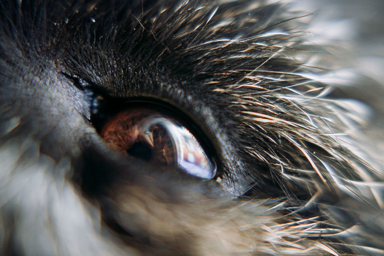 Close-up of a eye