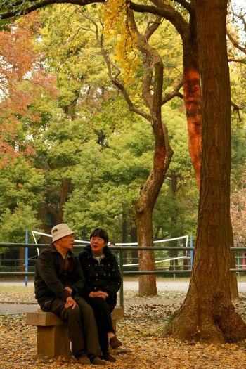 秋 Autumn Autumn