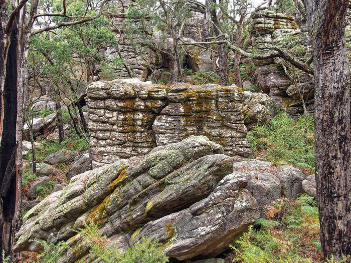 Grampians, Victoria Australia, March 2018. Grampian National Park Victoria Australia Forest Rock - Object Beauty In Nature No People