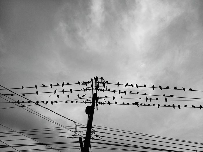 Bird Telephone Line Technology Cable Electricity  Flock Of Birds Flying Sky Power Line  Wooden Post Electric Pole Power Cable Electricity Pylon Electricity Tower Telephone Pole Power Supply Starling Silhouette
