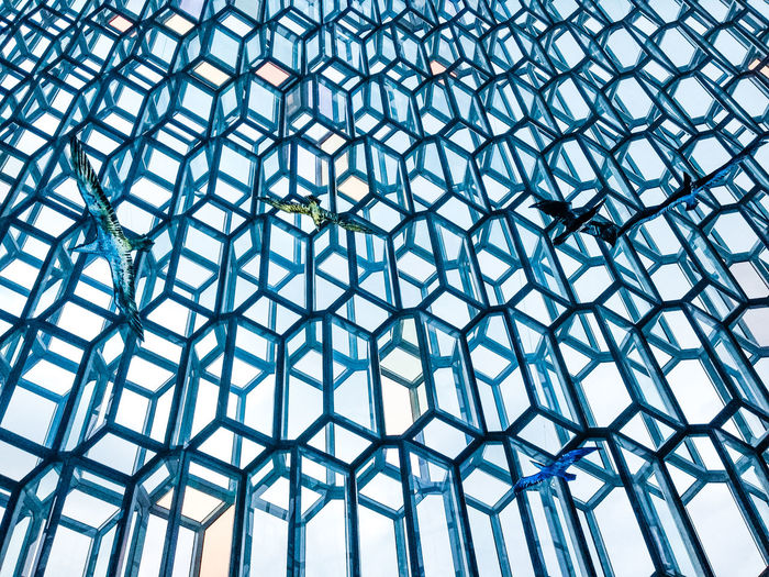 Glass Bird Harpa Reykjavik Architecture Glass Façade Winter Siteseeing Nature Icelandairwaves Olympus Travel Iceland Reykjavik