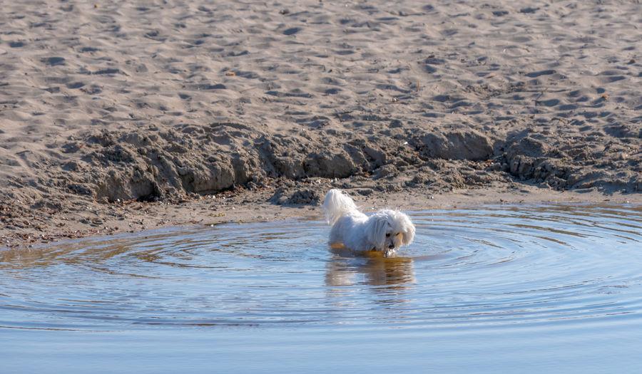 Dog swimming in sea at beach