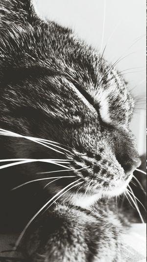 Cats Monochrome Relaxing Random