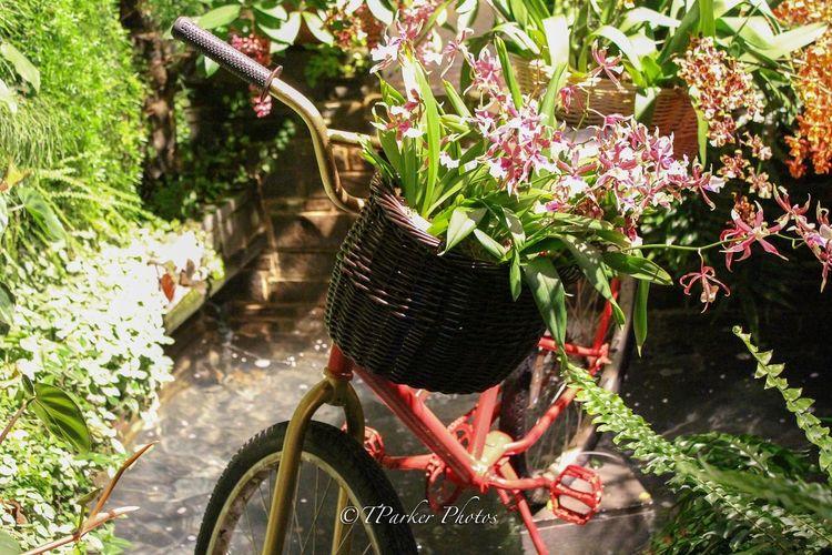 Flowers Fresh Floral Shutterbug Streetphotography Fartoodope Shoot2kill Hidden Gems  Hiddengems Peace Bicycles Art Lewis Ginter Botanical Gardens