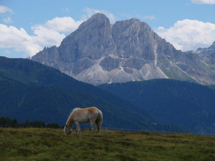 Horse grazing on grassy field against mountainscape